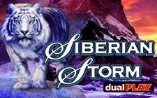 Siberiese Storm Dual Play